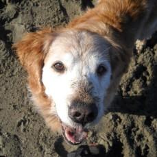 Sandy dog
