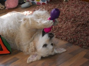 Jana lies on her back to squeeze treats from a toy into her mouth