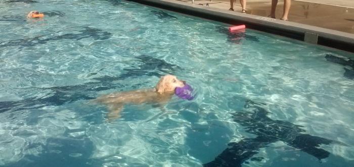 Jana enjoys Dog Swim Day in St. Petersburg, Fla.