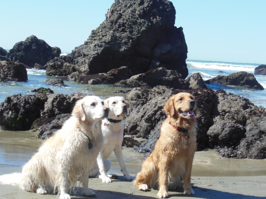 3 dogs who love the beach