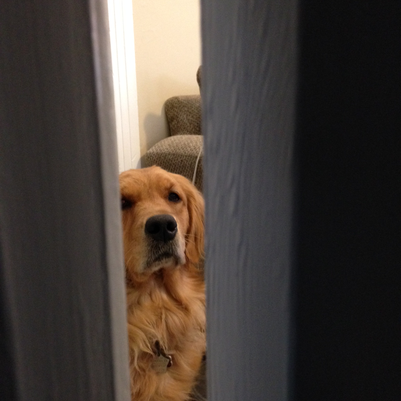 Hide and Seek | The Thinking Dog