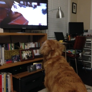 TV dog