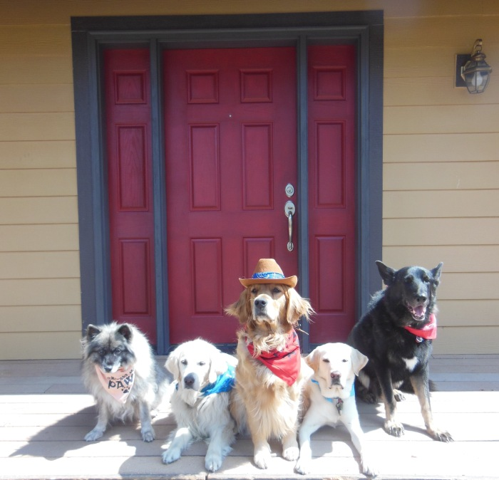 Five dogs pose; all wear bandannas and Cali, in the center, sports a cowboy hat.