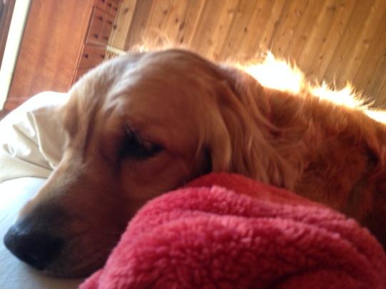Cali cuddle