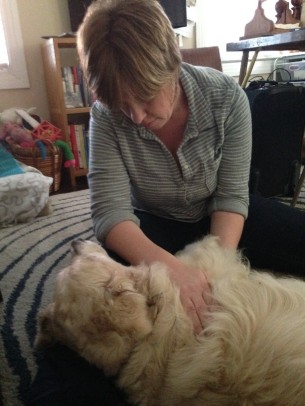 A golden retriever gets reiki to help ease her arthritis pain