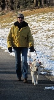 Alberta, a now-retierd yellow Labrador guide dog, leads Deni