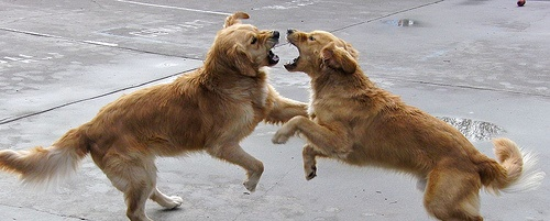 Are they playing or fighting?
