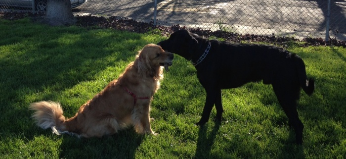 Cali and Ronen play tug with a very small stick
