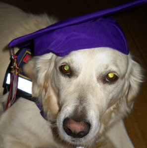 Jana, a white golden retriever, wears a mortarboard