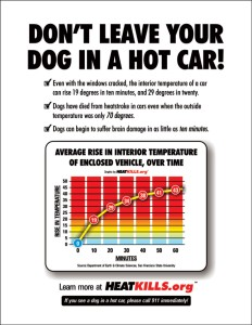 Graphic image showing how quickly a car can heat up on a hot day from heatkills.org