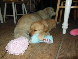 Jana and Cali, aged 9 weeks, rest after playing