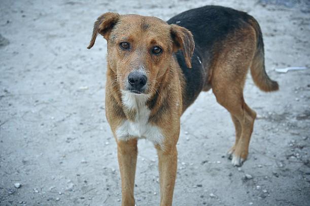 A stray dog with a sad expression