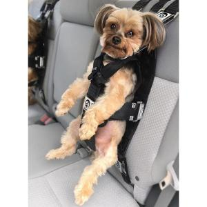 A small dog dangles from a car seatback, held by a Rocketeer harness