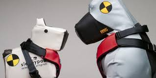 SleepyPod's large and small crash test dogs