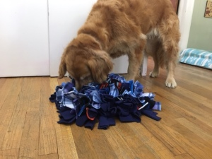Cali, a golden retriever, sniffs out treats that are buried in her snuffle mat