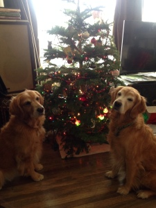 Cali and Dora sit by the Christmas tree