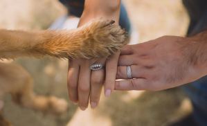 a dog paw and two human hands connect