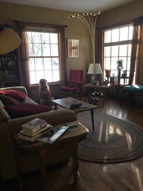 Cali, a golden retriever, sits in the living room, peering out a large window