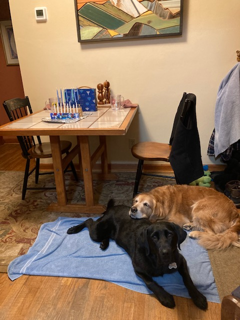Golden Cali rests her chin on black Lab Koala's back with unlit Hanukkah candles in the background