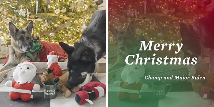 Champ and Major Biden, both German Shepherds, adorned the White House christmas card